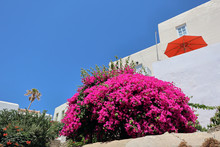 Vivid Pink Bougainvillea Bush, Red Parasol, Blue Sky And White Walls, Naxos Old Town, Greek Islands