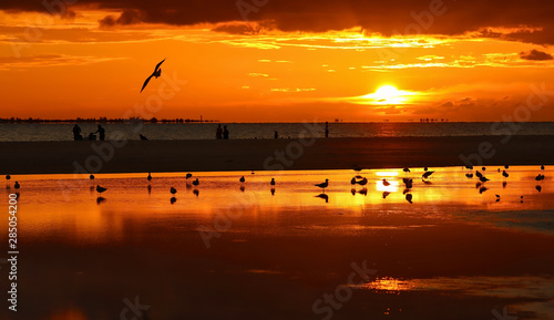 Birds and people enjoy the sunset on Fort Myers Beach, Florida, USA Canvas Print