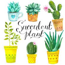 Watercolor Cactus And Succulen...