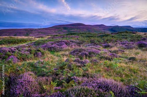 Keuken foto achterwand Heuvel Heather covered Lordenshaws Hillfort and Simonside Hills, located near Rothbury in Northumberland National Park and has several large stones with prehistoric rock art