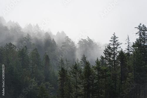 Recess Fitting Gray traffic Foggy tree landscape of the Pacific Northwest, North America