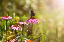 Butterfly Pollinating Wildflow...