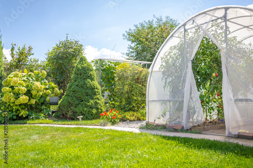 Fotografia greenhouse with vegetables in private garden in back yard