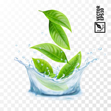 Realistic Transparent Isolated Vector Splash Of Water With Leaves, Editable Handmade Mesh