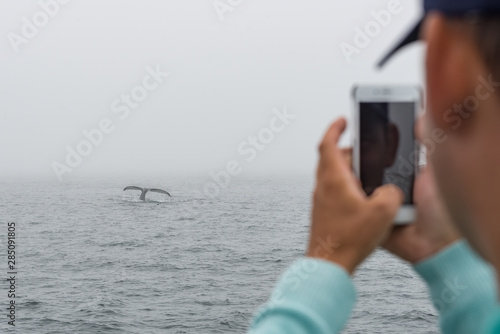 A young man takes a photo of a humpback whale tail with his mobile phone on a whale watching boat in the Atlantic Ocean off the Gloucester coast of Massachusetts Canvas-taulu