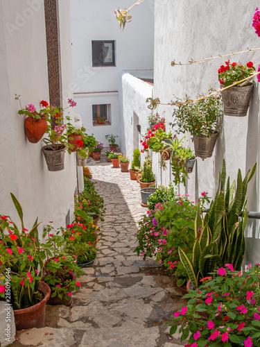 Fototapeta premium ulica z bielonymi domami z wielobarwnymi doniczkami w pueblo blanco w Andaluzji