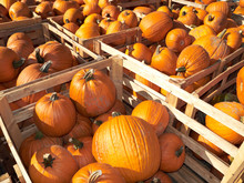 Germany, Pumpkins In Crates