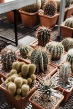 Ceramic Pods With Succulent