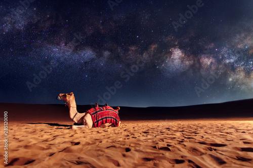 Fotografía  Camel animal is sitting on the sand dune in a desert