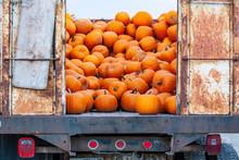 A Pile Of Orange Pumpkins Spills Out Of An Old Farm Truck.