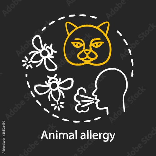 Vászonkép Animal allergy chalk concept icon