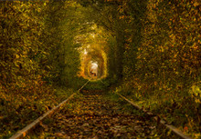 The Tunnel Of Love, A Green An...