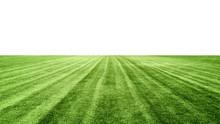 Stadium Grass On White Background