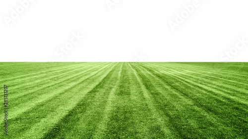 Fotobehang Cultuur stadium grass on white background