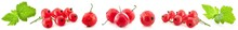 Collection Of Red Currant Isol...