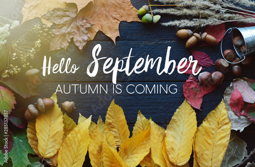 Fotografija hello September card, Autumn composition from leaf, vintage style