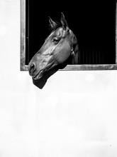 Horse Head Over Dark Window