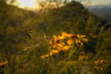 Wild Flower With Sunset