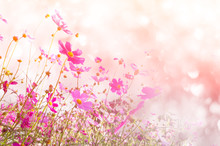 Blurred Of Cosmos Flowers With...