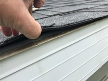 Roof Shingle Hail Damage