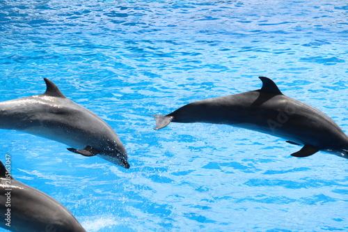Foto op Plexiglas Dolfijnen 名古屋港水族館 イルカ