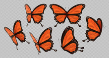 Orange Monarch Butterfly Set I...