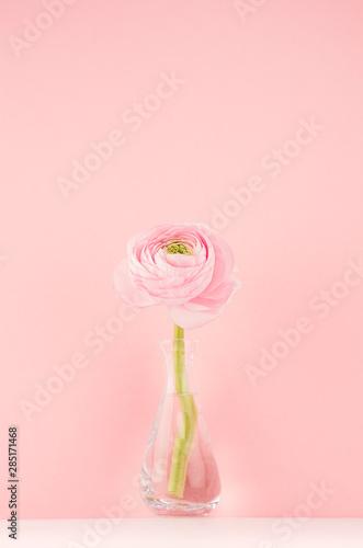 Fresh lovely spring  ranunculus in delicate vase in gentle soft light pink color interior, vertical.