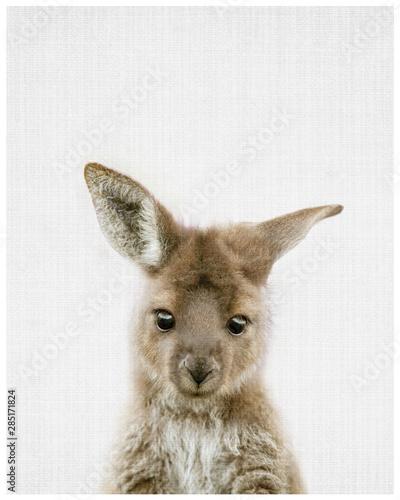 Foto op Canvas Kangoeroe kangaroo