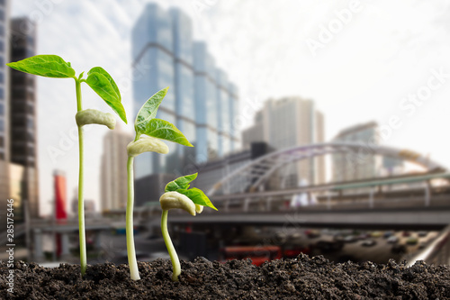 Obraz Green sprouts on blurred city background, environmental concept - fototapety do salonu