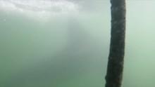GoPro POV Shot Within A Shark ...