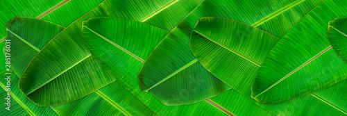 Fotografía Fresh green banana leaves texture abstract background