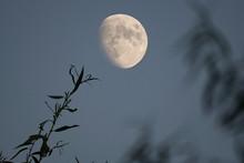 Twilight Sky Nearly Full Moon ...