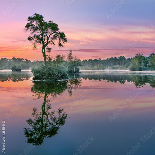 Sunrise reflected in a lake in a forest in the South of The Netherlands Wall mural