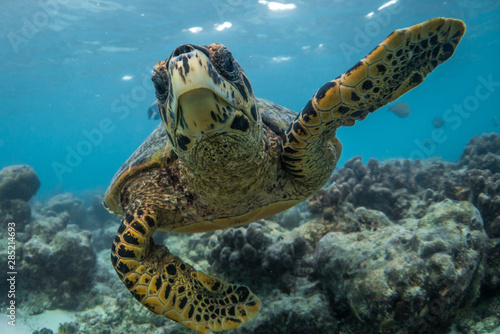 Fototapeta  Green sea turtle