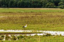 Rural Landscape With A Stork. ...