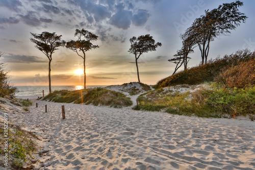 Obraz Piaskowa droga do Morza Bałtyckiego - fototapety do salonu