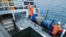 Crew Of Fishermen Open Trawl N...
