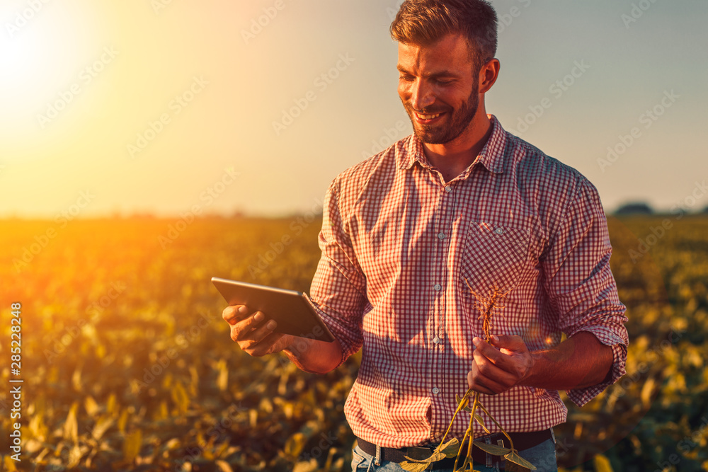 Fototapeta Farmer standing in soybean field looking at tablet at sunset.