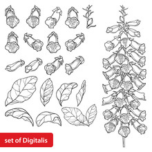 Set Of Outline Toxic Digitalis Purpurea Or Foxglove Flower Bunch, Bud And Leaf In Black Isolated On White Background.