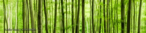 Panoramic background of green forest, abstract soft wallpaper - 285238828