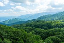 自然 登山 旅行 白馬大池