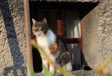 Affectionate Domestic Cat Watc...