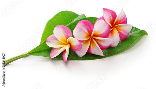 Wall Murals Plumeria plumeria flowers and leaves isolated on white background