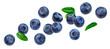 Leinwandbild Motiv Blueberry isolated on white background with clipping path