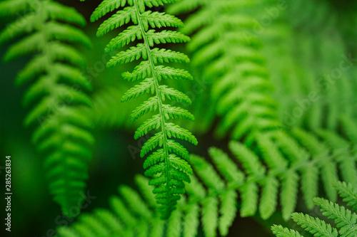 Photo Wild fern in the northern forest