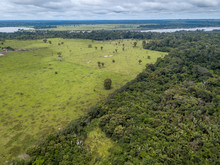 Aerial View Of Deforestation A...