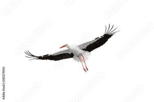 Fotografie, Obraz flying stork isolated on white