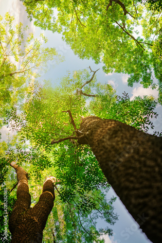 Garden Poster Forest Forest trees. nature green wood sunlight backgrounds..