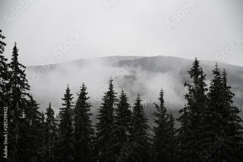 tree fog in mountains