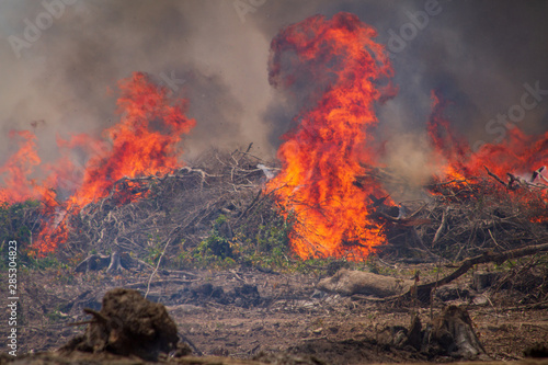 Fotografiet  Forest on fire on the banks of the Xingu River, Amazon - Brazil